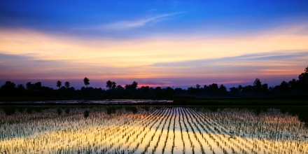 Sunset over rice fields South East Asia